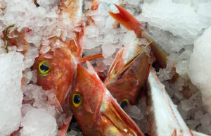 Gurnard in a box surrounded by ice